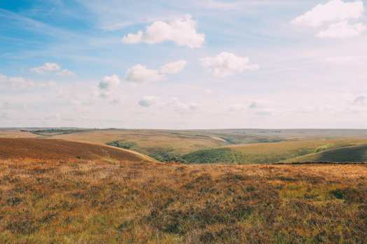 Searching For Wildlife In Exmoor, England (42)