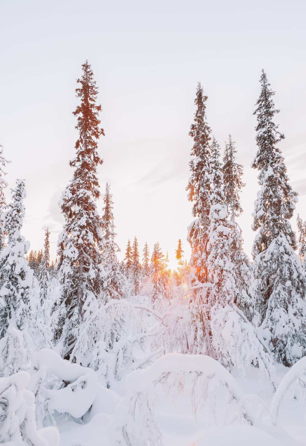 12 Of The Best Things to Do in Lapland, Finland (5)