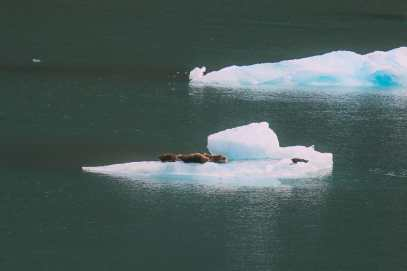 Sailing The Impressive Tracy Arm And Endicott Arm Fjord To The Dawes Glacier, Alaska (30)