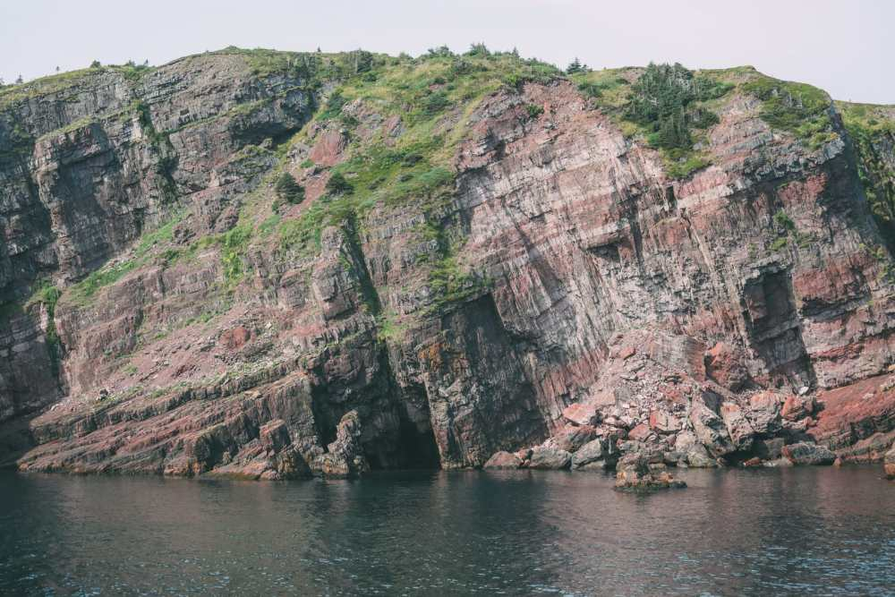 Searching For Puffins In Newfoundland, Canada (1)