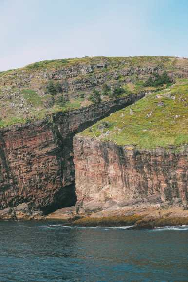 Searching For Puffins In Newfoundland, Canada (4)