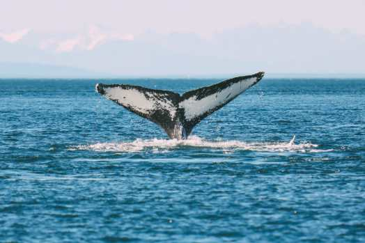 Humpback Whales, Glaciers And Northern Lights – The Most Magical Experience Aboard Celebrity Cruises Solstice To Alaska (11)