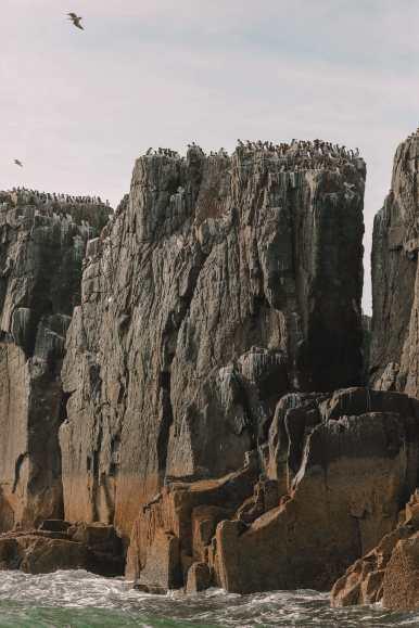 Visiting The Beautiful Bamburgh Castle & Farne Islands, England (35)