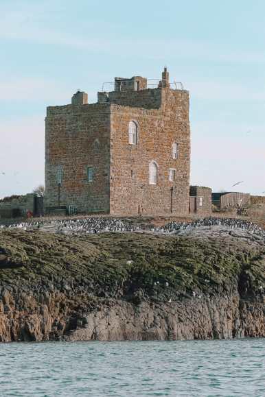 Visiting The Beautiful Bamburgh Castle & Farne Islands, England (13)