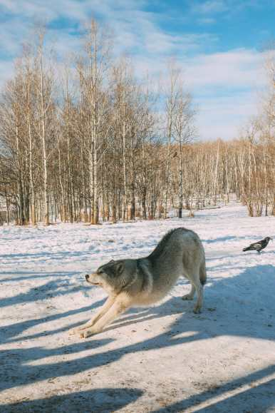 Grotto Canyon, Wolfdogs And The Canadian Rockies (32)