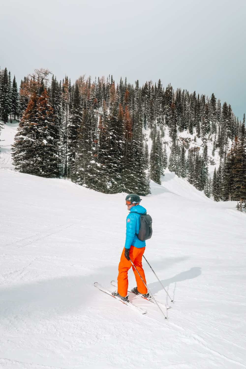 Finding Wild Moose And Skiing In Sunshine Village... In Banff, Canada (16)