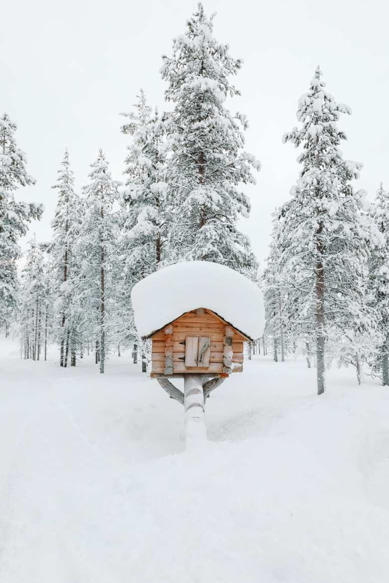 The Northern Lights Village And Star Arctic... In Lapland, Finland (12)