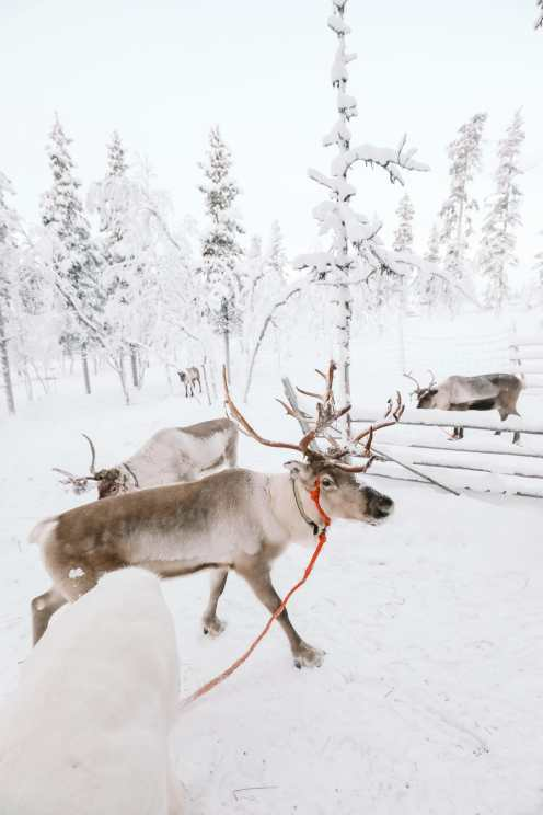 The Northern Lights Village And Star Arctic... In Lapland, Finland (15)
