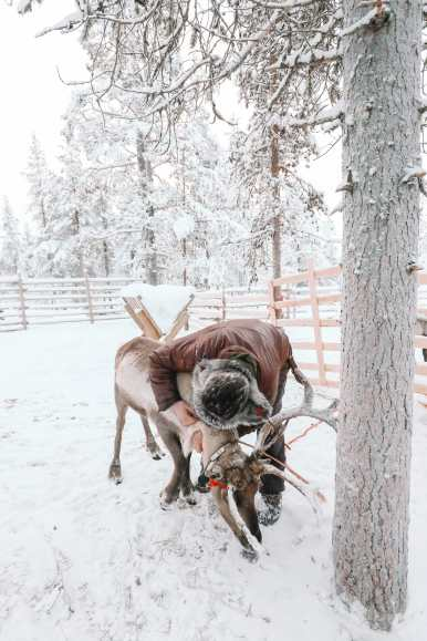 The Northern Lights Village And Star Arctic... In Lapland, Finland (16)