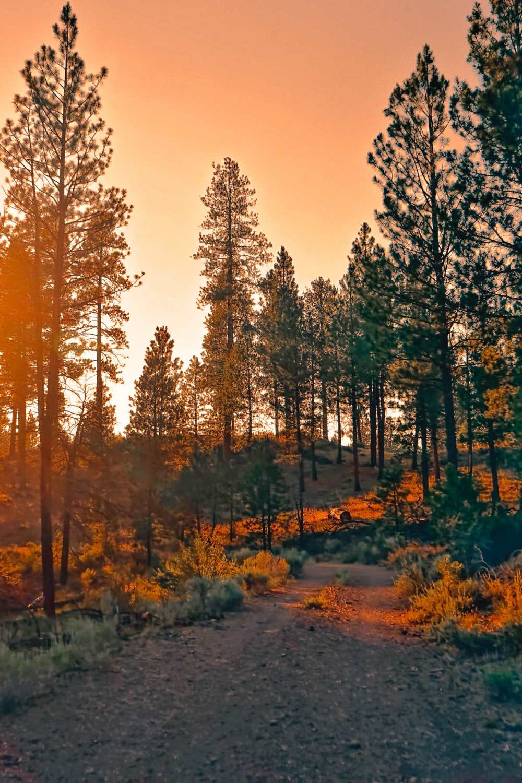 Best Hikes In Arizona (17)