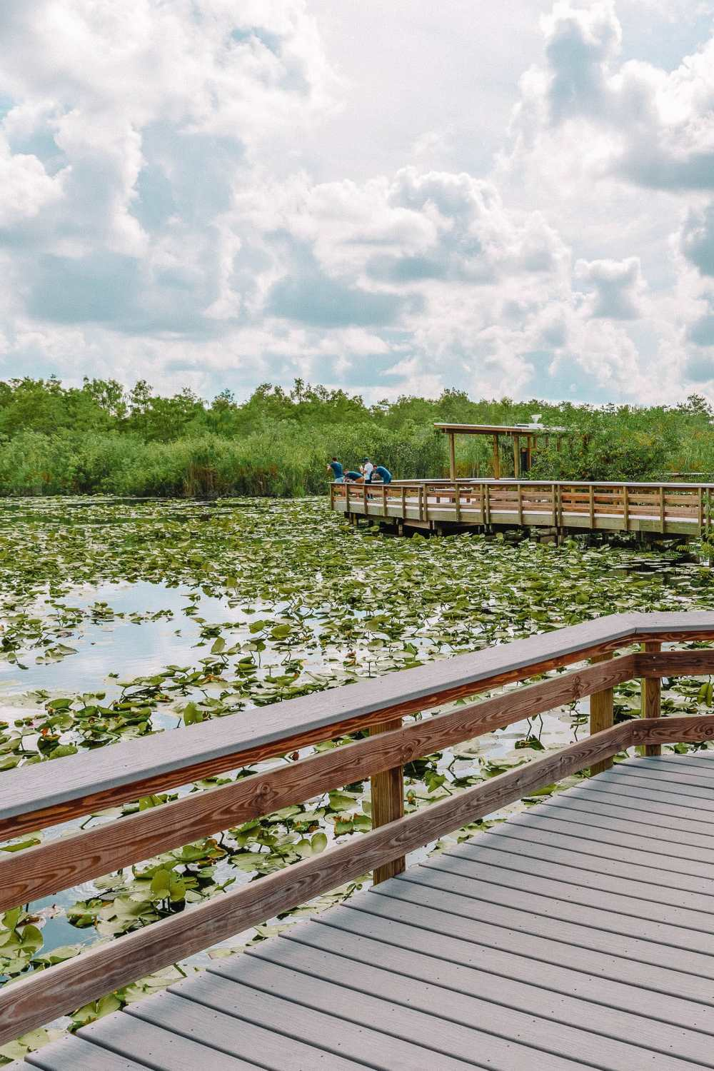 Best Things To Do In The Everglades (13)