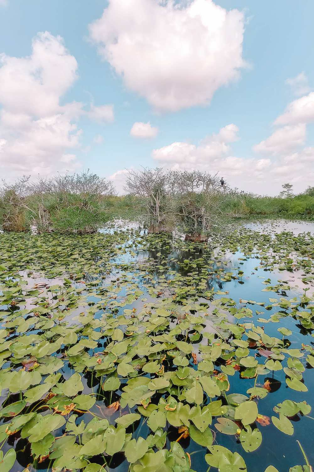 Best Things To Do In The Everglades (16)