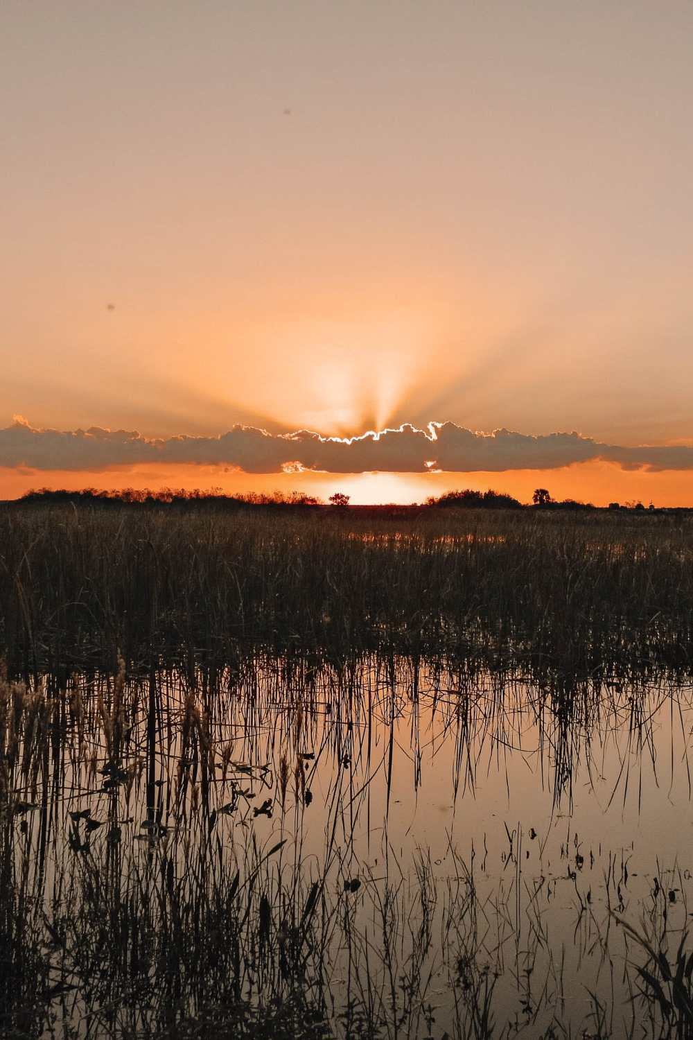 Best Things To Do In The Everglades (15)