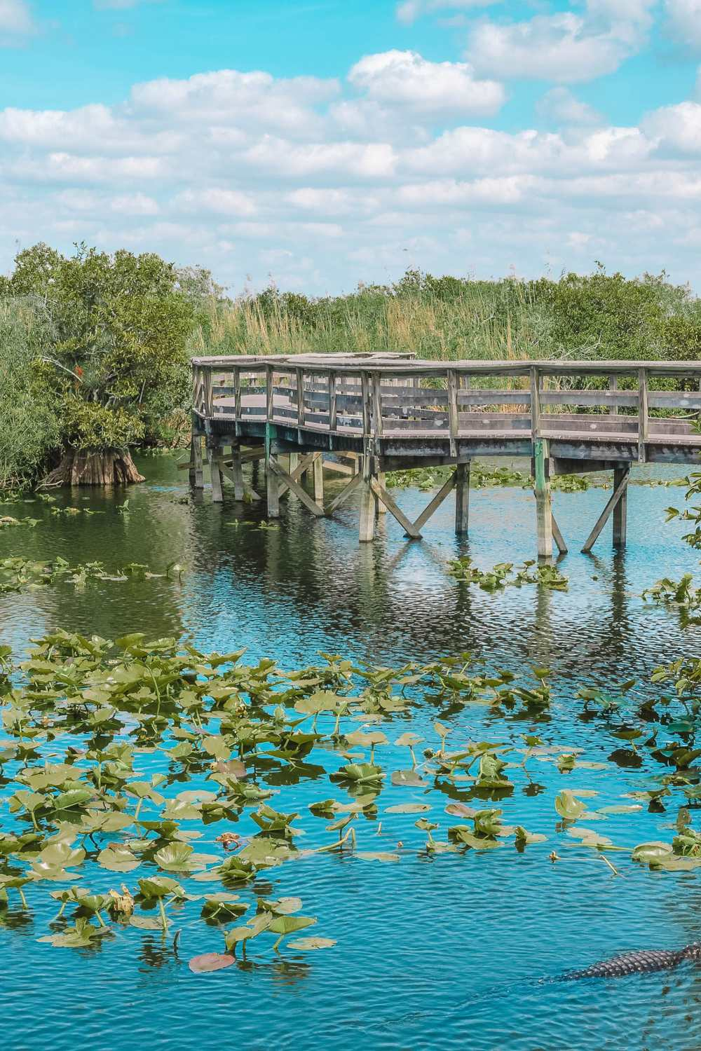 Best Things To Do In The Everglades (6)