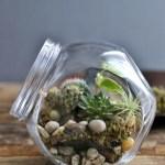 テラリウムの作り方!多肉植物と苔で癒しの自然を再現♪