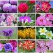10 flower in japan
