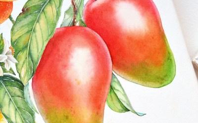 Watercolour Masterclass – Fruit