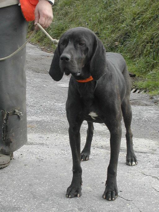 North Carolina's official dog is the Plott Hound