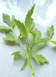 Lovely lovage