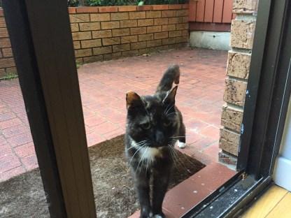 Tony, the shared Strata cat, greets us.