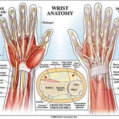 Palmar Hand Muscle Anatomy Diagram Dual Immersion Switch Wiring Wrist | New York, Ny Handsport Surgery Institute