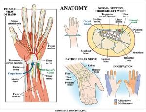 Wrist Anatomy   New York, NY   HandSport Surgery Institute