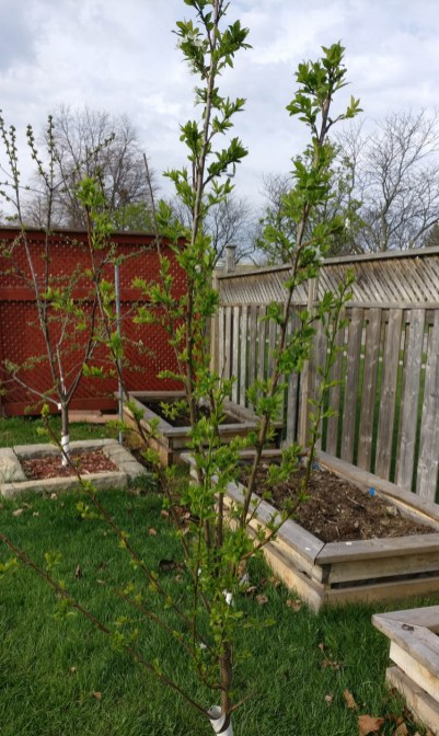 We also plant fruit trees, providing them with proper support.