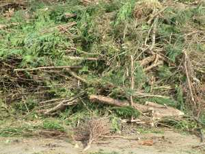 Green Waste from Pruning Trees