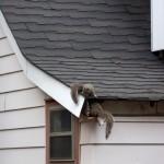 Squirrels can Destroy