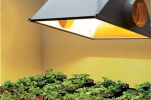 Indoor Plant Lights Home Depot