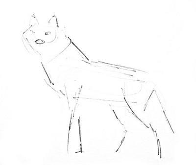 Як намалювати вовка поетапно - уроки малювання 97c3ff2d82b76