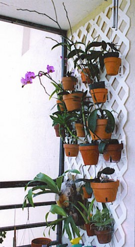 Orchid Lovers  HangAPot