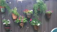 plant hangers for fences