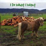 Little Pony - I Do What I Want