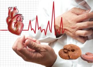 Bệnh tim mạch sử dụng nước uống nấm linh chi cải thiện tình trạng