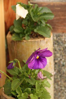 小さないのちの草花