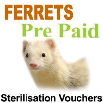 Pre Paid Sterilisation for Ferrets