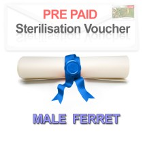 Pre paid Sterilisation for a Male Ferret