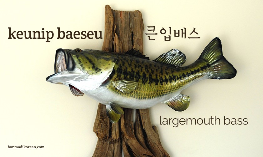 keunip baeseu - Korean for largemouth bass