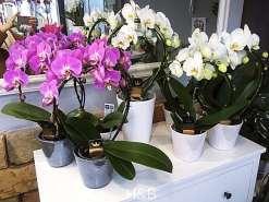 hajlított orchideák különböző színekben