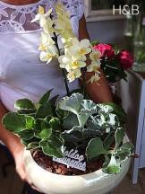 orchidea beültetés más virágokkal