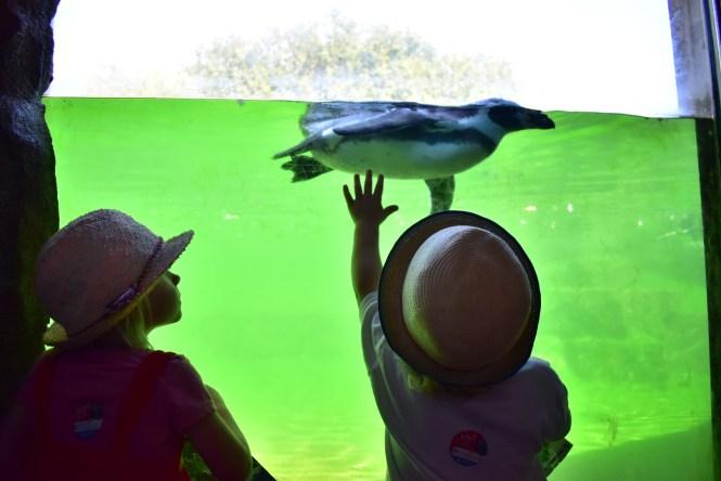 Penguins Marwell Zoo