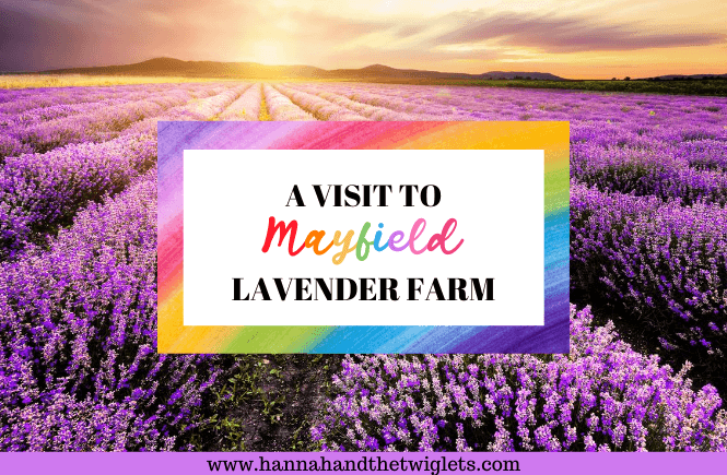 A visit to Mayfield Lavender Farm