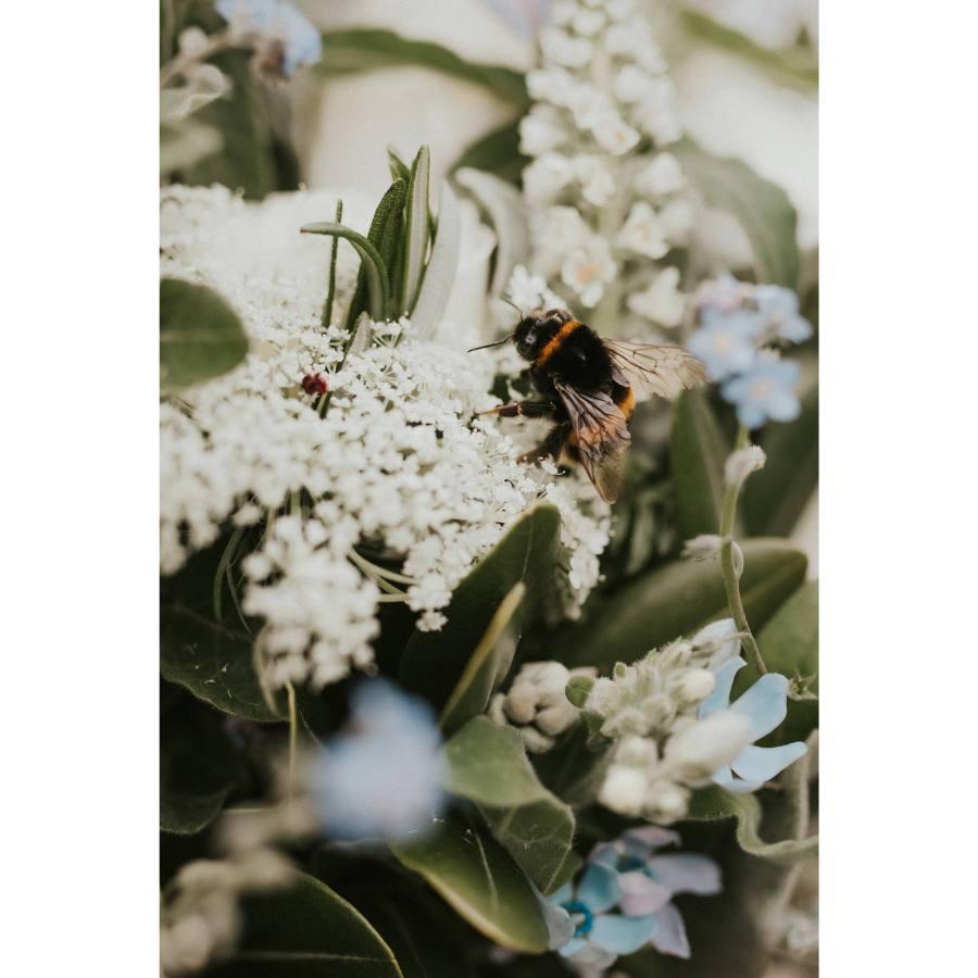 Spring Blooms Print By Hannah Bird