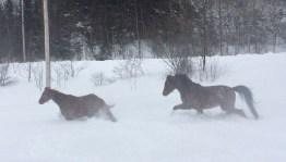 snow-play-6