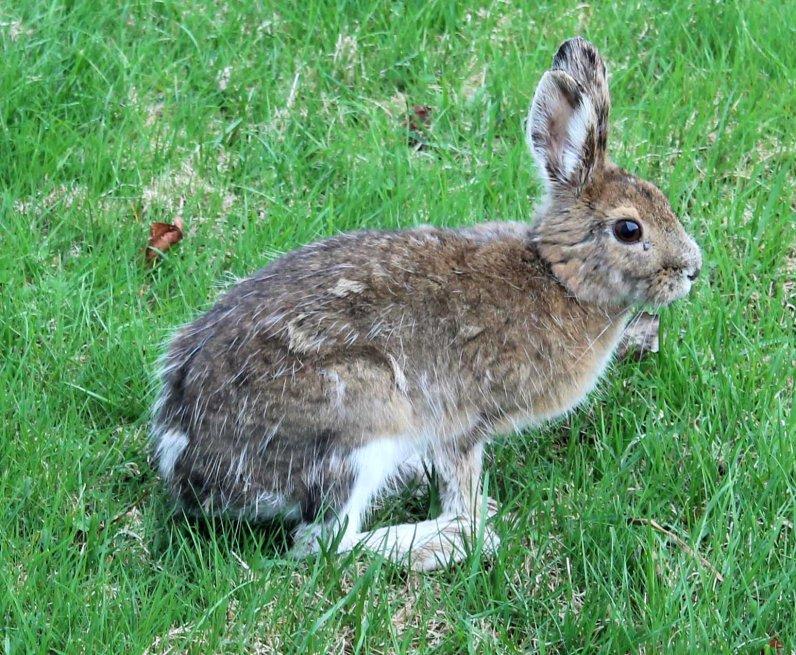 bernie-the-bunny-02