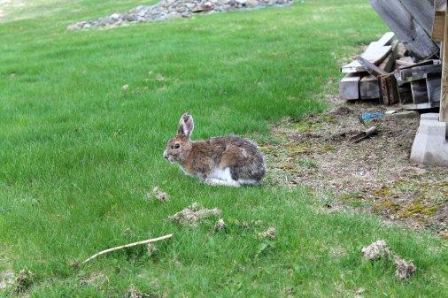 bernie-the-bunny-03