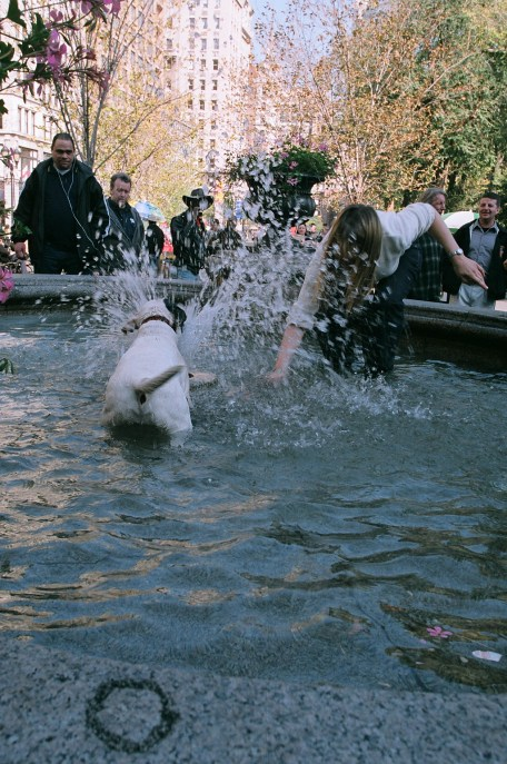 Fountain Divers