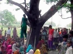 Mango tree hanging
