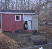 farm hans goat edited13